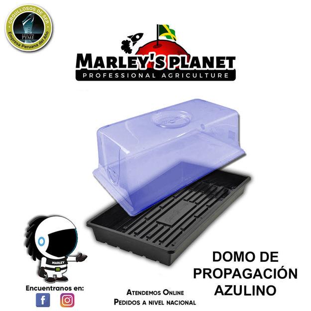 Imagen de DOMO DE PROPAGACIÓN AZUL