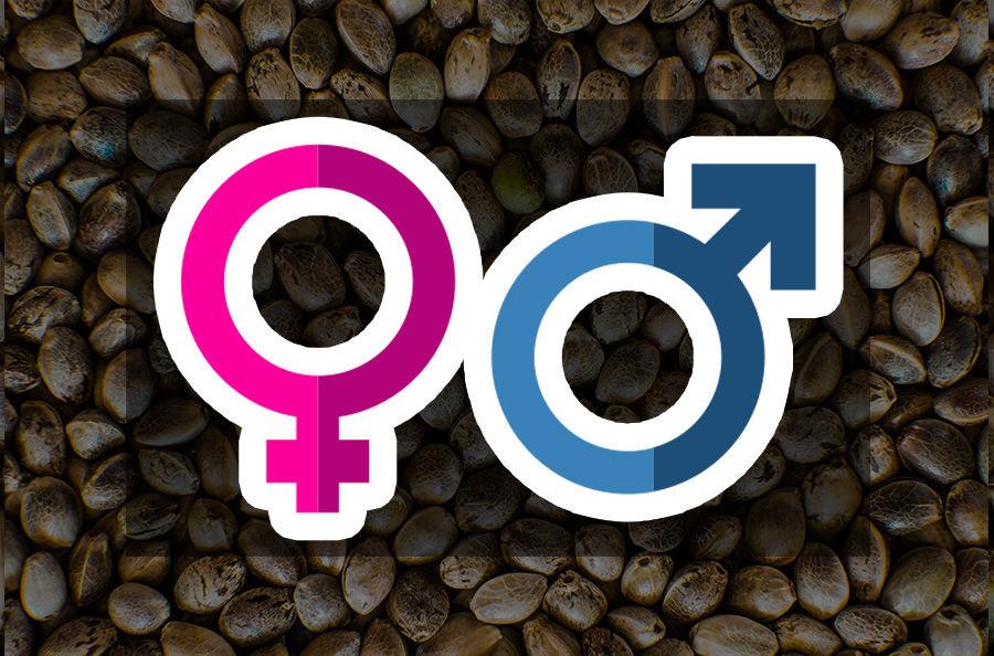 Imagen para la categoría FEMINIZADAS